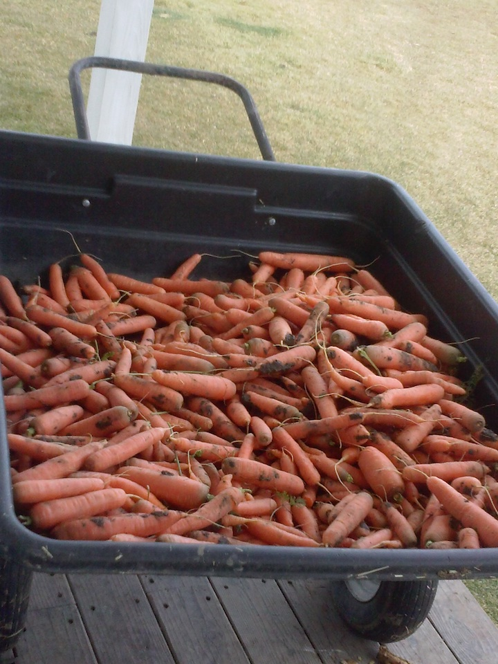 My carrots in my cart.