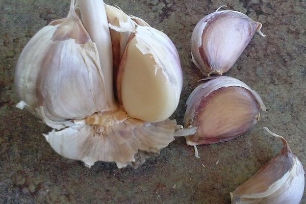 Garlic not just for cooking