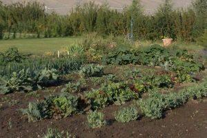 Country vegetable garden