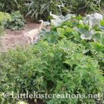 Growing your own produce