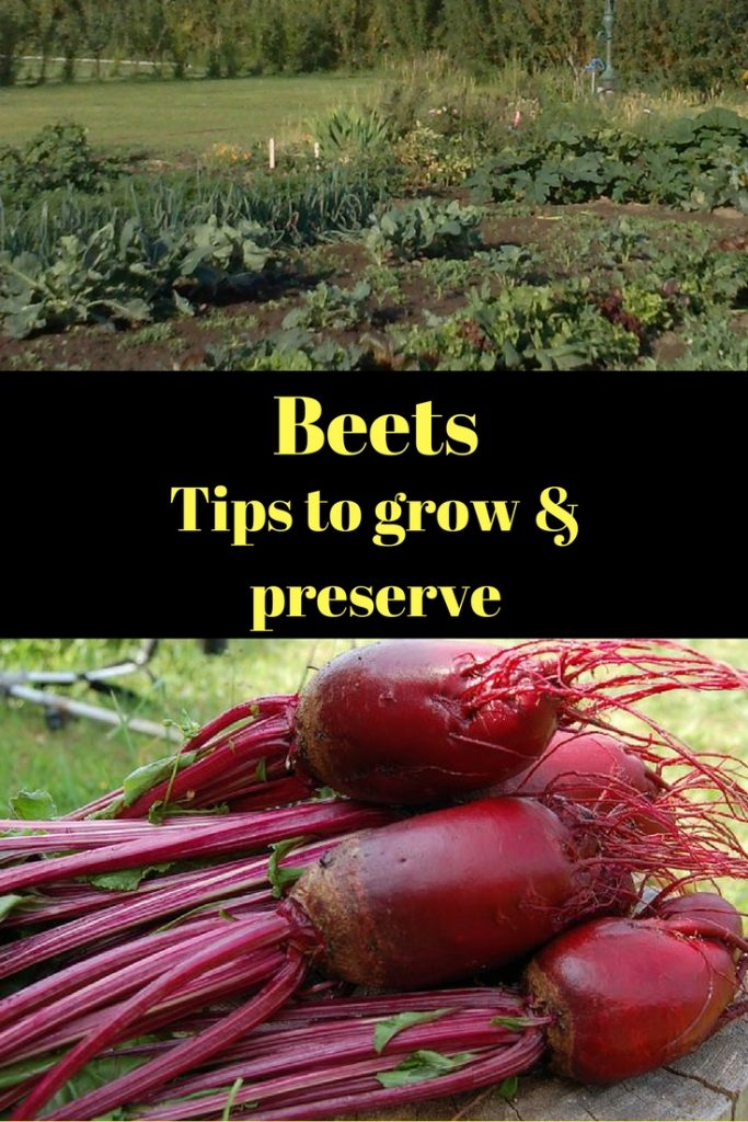 Tips to preserve beets