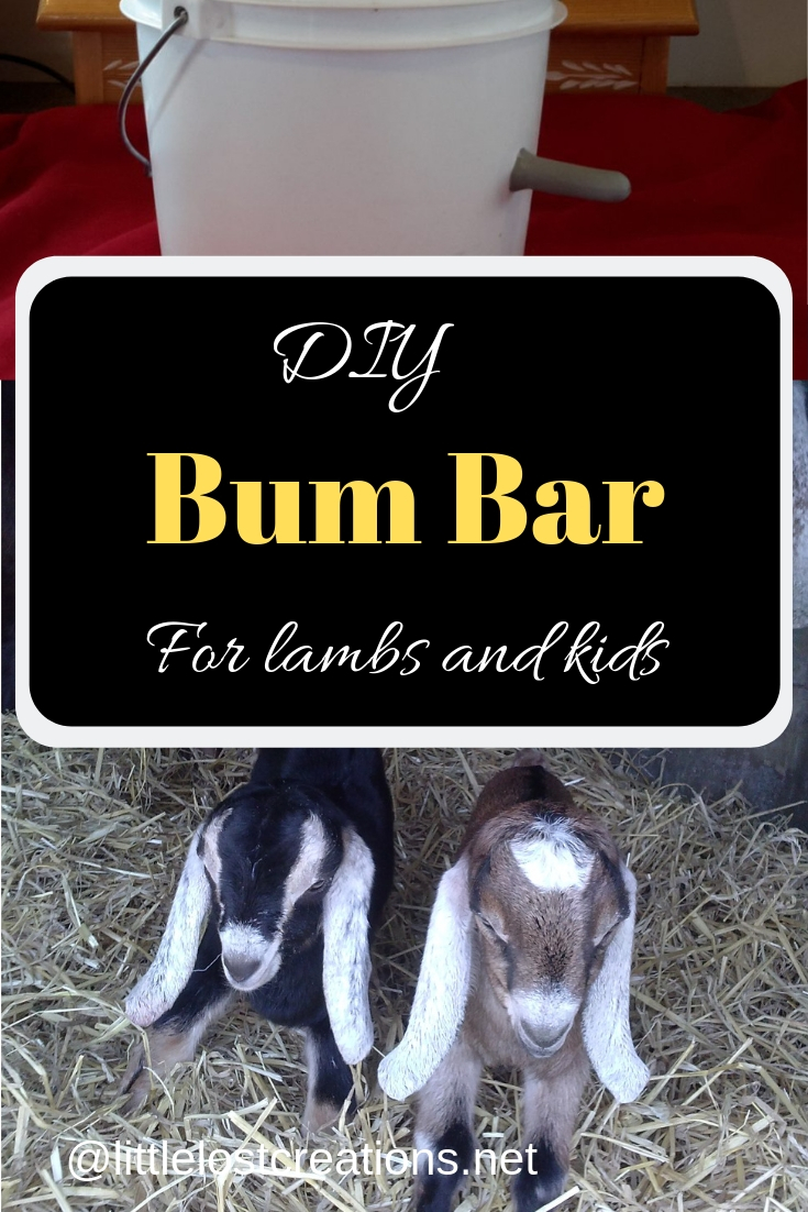 DIY Bum Bar for lambs and kids, two long eared baby goats, bum bar