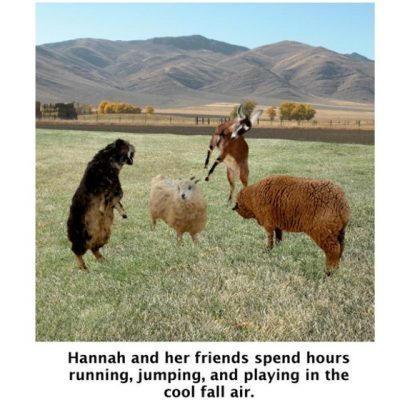 3 goats and 1 sheep playing in the cool fall air, Slippers for Hannah, Brendaskidsbooks.com