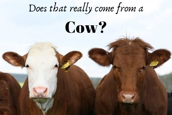 Does that really come from a cow 2 cows