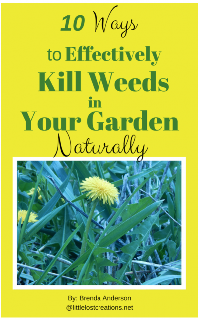 10 ways to effectively kill weeds in your garden naturally, yellow background, picture of dandelion and weeds