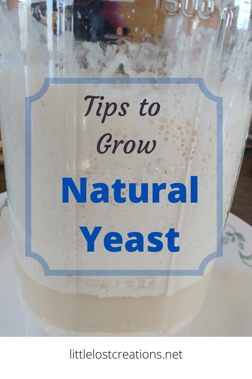Tips to grow natural yeast.  A canning jar with yeast bubbling in the jar.