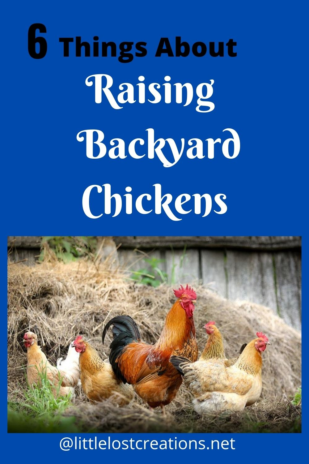 6 things about raising backyard chickens, chickens with a rooster in the straw @ littlelostcreations.net