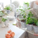 Tray with herbs on it in a kitchen. White countertop with other potted plants