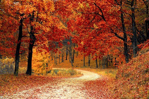 A dirt road winding through beautiful fall colors of red orange and yellow.